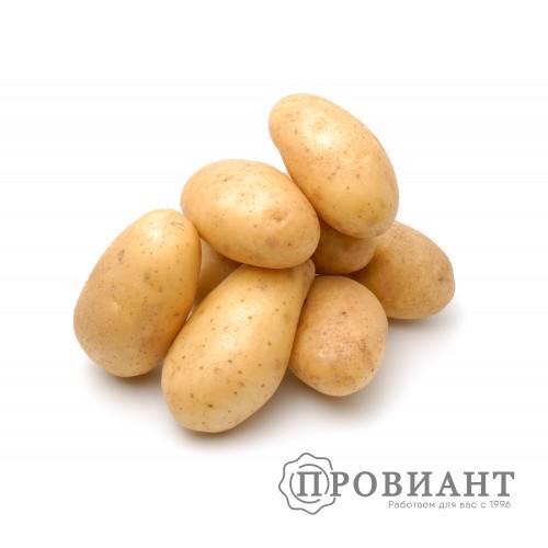 Картофель (вес)